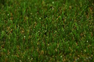 33mm-natural-grass-landscape-2