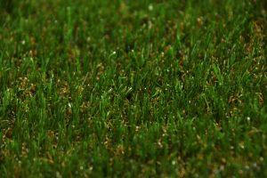 33mm-natural-grass-landscape-2