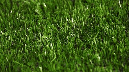 Lion-Grass